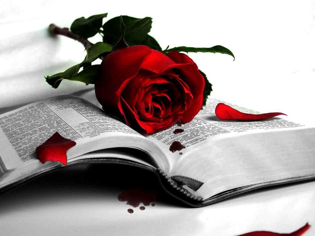 Photo of صلوات في محراب الحب….بقلم مدحت حجاج – خاص لأوراق عربية