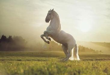 حصان أبيض ، موقع أوراق عربية - قصيدة عامية