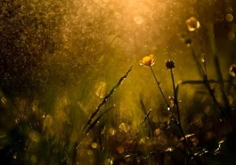 مطر ، موقع أوراق عربية - خواطر