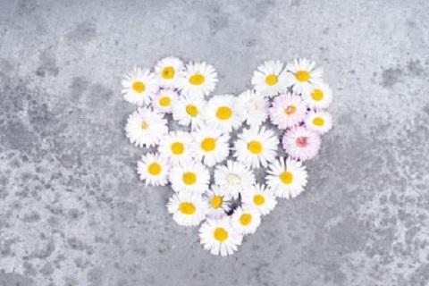 قلب بالورد ، موقع أوراق عربية - خواطر