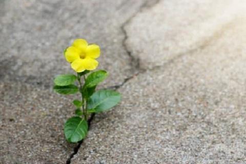 وردة صفراء ، موقع أوراق عربية - مقالات